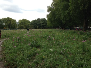 London Fields - Wild meadow flowers